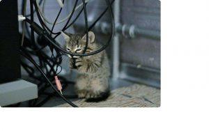 кот грызет провода